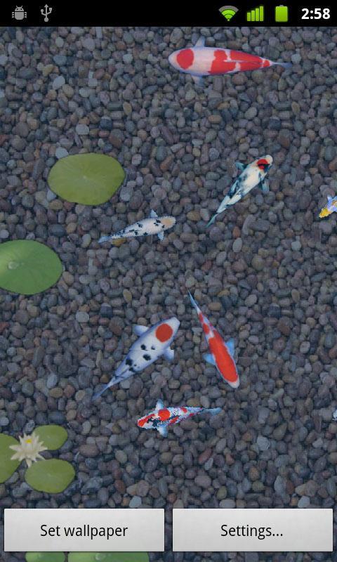 鲤鱼池塘动态壁纸