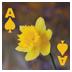 拖拉机和斗地主 棋類遊戲 App LOGO-硬是要APP