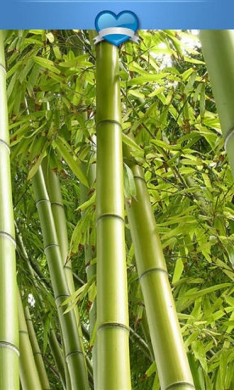 高清护眼翠竹壁纸-应用截图