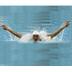 體育競技App|游泳大赛 LOGO-3C達人阿輝的APP